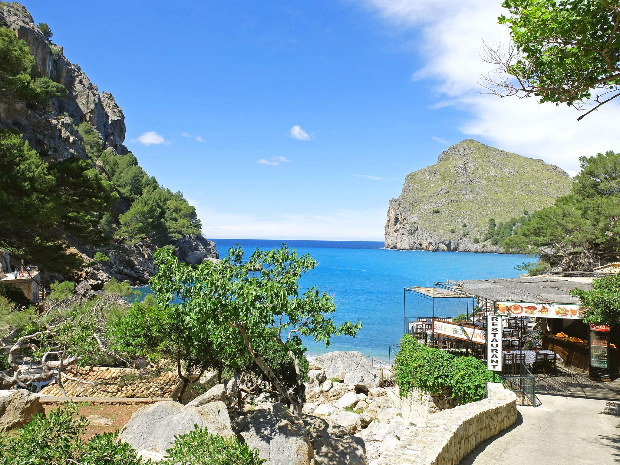 Olivia Leaves   Visit Mallorca